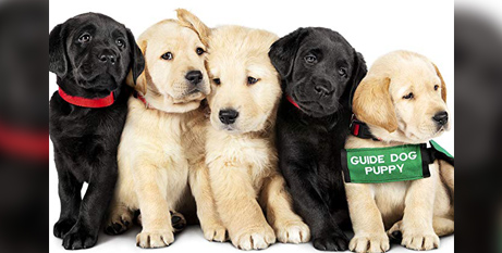 The stars of Pick of the Litter (IMDB)