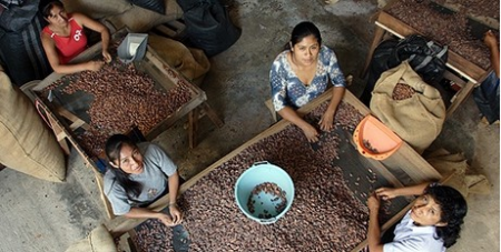 Cacao farmers in Peru