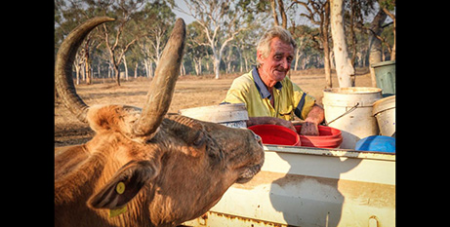 Michael Keane has cared for the cattle for 30 years (ABC Kimberley/Emily Jane Smith)