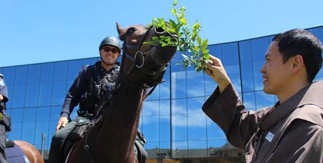 A horse from the Queensland Mounted Police receives a blessing (Qld Police/Facebook)