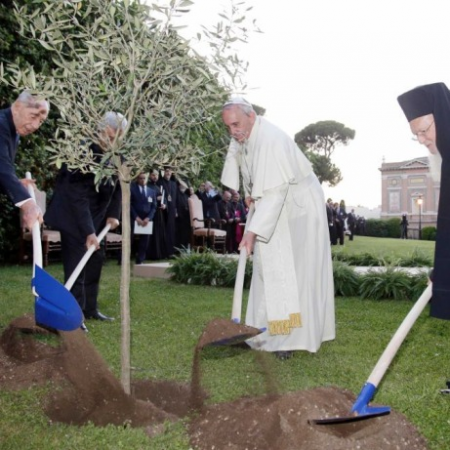 An olive tree was planted