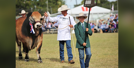 Cathedral College Rockhampton year 9 student Cody Mortimer leads the champion Brahman bull in the Grand Parade of Champions at BEEF2021 (Catholic Education Rockhampton)