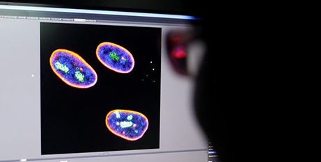 A researcher observes the nucleus of human stem cells (CNS/Tingshu Wang, Reuters)